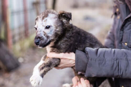 Micose em filhotes de cães: sintomas e tratamentos
