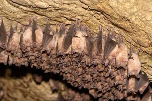 Morcegos pendurados em caverna
