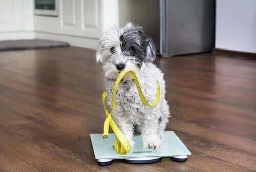 Ganho de peso em cães