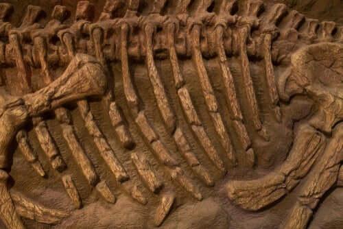 Ossos fósseis de pássaro