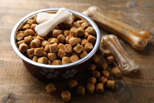 Ração seca para cães: 4 razões para evitá-la