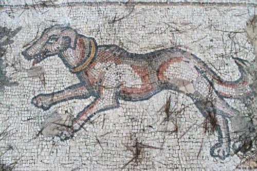 Raças extintas de cães que você precisa conhecer