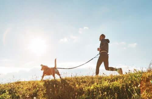 A importância do cão na sociedade: mais atividade física