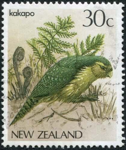 Kakapo, uma ave da Nova Zelândia