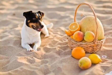Uso clínico da vitamina C para cães