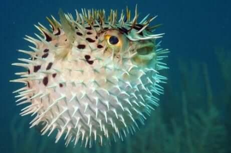 Animais que podem ser extintos na sexta grande extinção