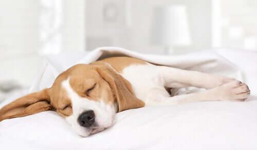 Por que meu cachorro fica acordado durante a noite?