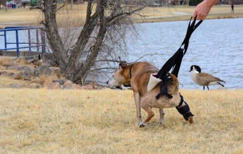 Cachorro com insuficiência renal
