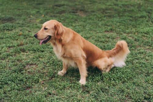 Dietas específicas para cães que sofrem de doença renal