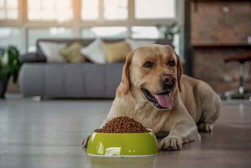 Cachorro com tigela de ração