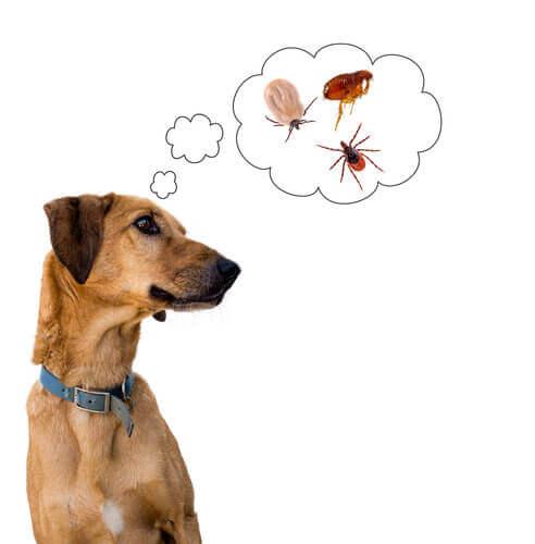 Razões pelas quais os cachorros se coçam