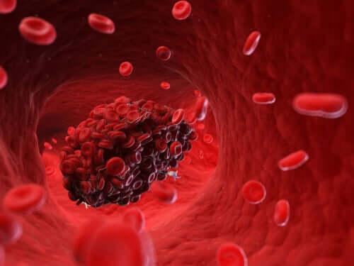 Coágulos sanguíneos em cães: principais riscos