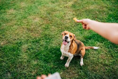 Combater a obesidade dos cães