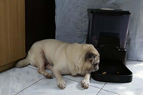 Cachorro ao lado de alimentador automático