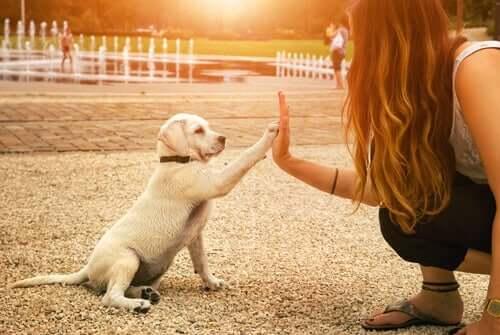 Inteligência dos cães