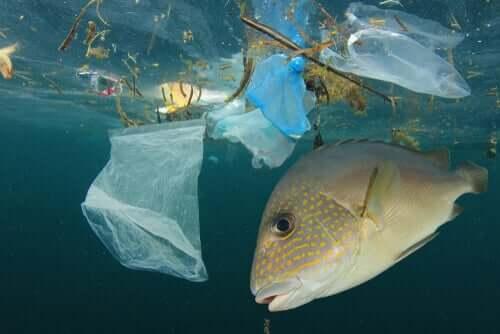 Poluição nos mares