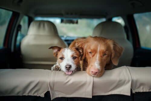 Consequências de deixar um cachorro sozinho no carro