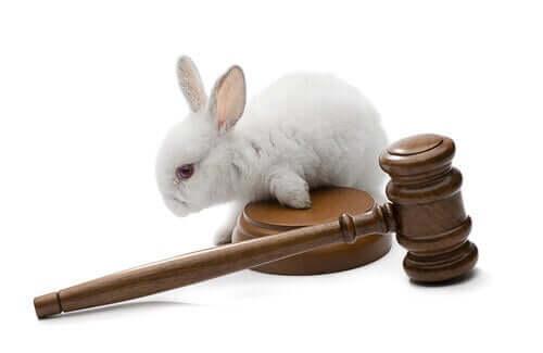 Direitos dos animais