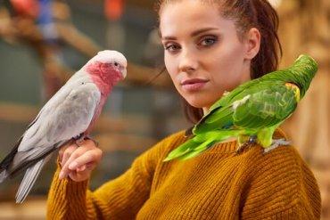 5 dicas para ensinar um papagaio a falar