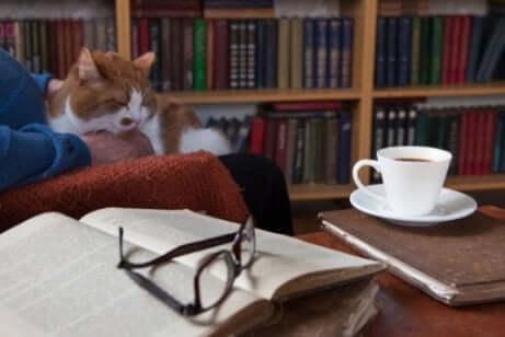 Por que os gatos inspiraram escritores?