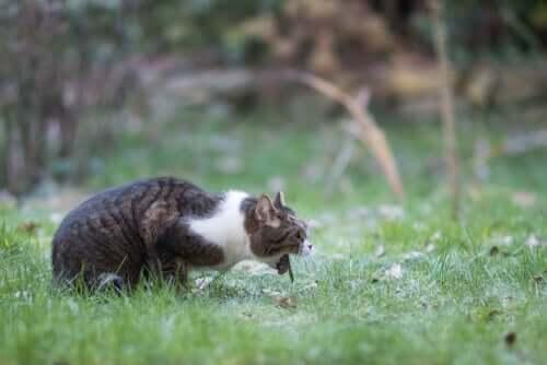 Vômito agudo em gatos: causas e soluções