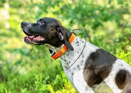 Conheça os rastreadores GPS para cães