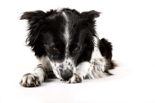 Higiene excessiva em cães: como prevenir e tratar