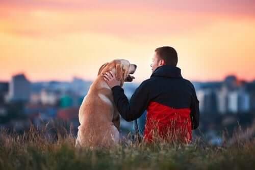 3 histórias adoráveis de animais e seres humanos