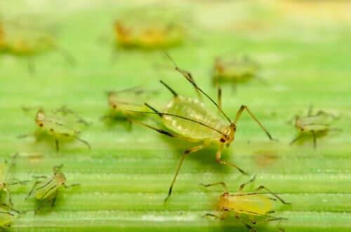 O possível uso de insetos como armas biológicas