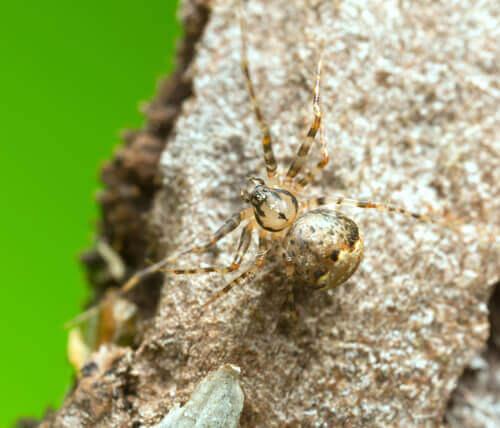 Aranha em pedra