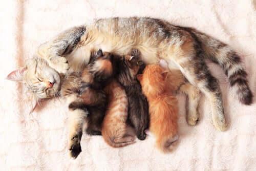 7 dicas para ajudar no parto da sua gata