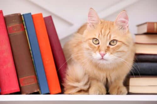 Por que os gatos inspiraram tantos escritores?