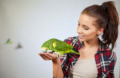 Papagaio comendo na mão da sua dona