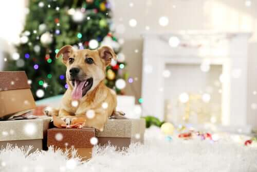 Animais de estimação no Natal