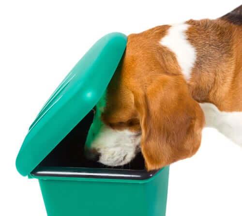 Cachorro revirando lata de lixo