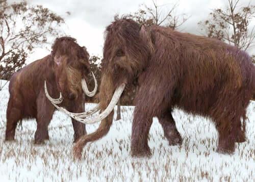 O que é a sexta grande extinção?