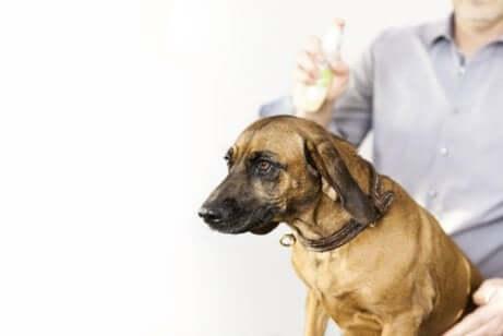 Spray antipulgas para cachorros