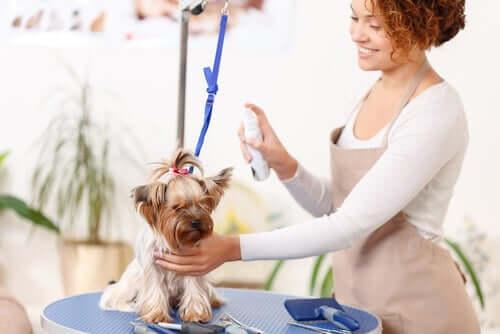 Sprays antipulgas para cachorros