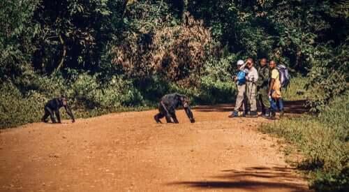 Ver animais junto com pessoas nos faz pensar que eles não estão ameaçados
