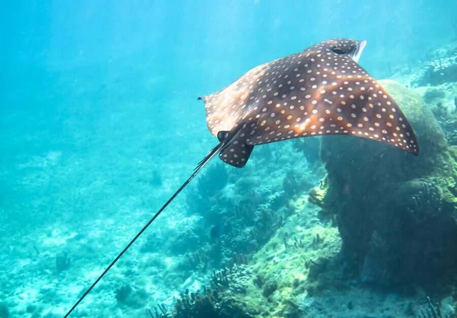 Queimaduras provocadas por animais marinhos