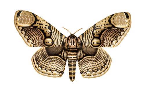 Os insetos mais feios do mundo