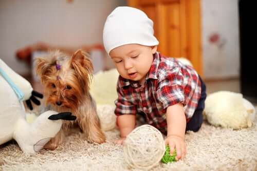 Cachorro com bebê em casa