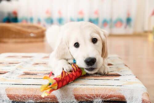 Cachorro brincando com brinquedo
