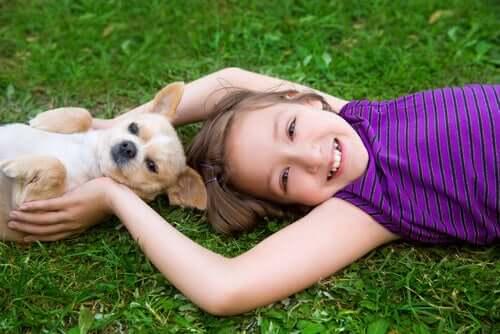 Principais acidentes domésticos com cachorros de raças pequenas