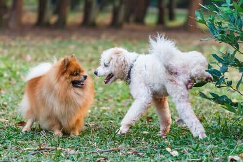 Cachorros no parque