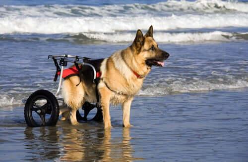 Modelos de cadeira de rodas para cães