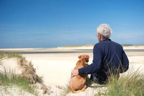 A saúde dos cães idosos: três alterações que merecem atenção