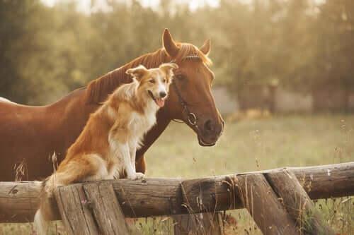 Células-tronco no combate à osteoartrite em cães e cavalos