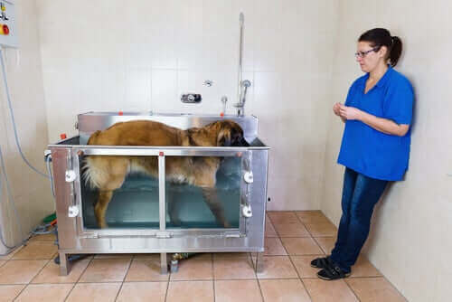 Cachorro em sessão de hidroterapia
