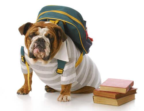 Cachorro com mochila nas costas
